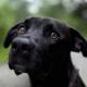 Пёс из приюта не сдержал эмоций когда понял, что его не усыпят