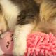 Кошка обнимает куклу во время сна