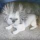 Статическое электричество и собака