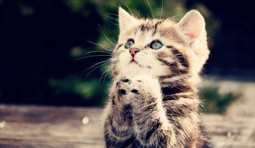 15 милых видео с котятами