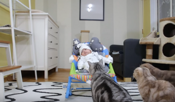 Котики знакомятся с младенцем