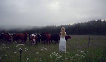 Как правильно позвать шведских коров
