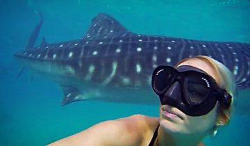 Гигантская китовая акула и хрупкая девушка