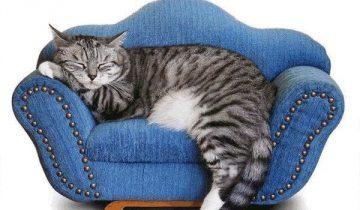 Кошка спит, как человек
