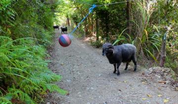 Если повесить мяч на веревке и оставить в лесу…