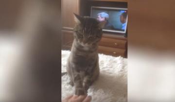 Кот не желает, чтобы его трогали