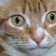Что так удивило этого кота?