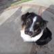 Тоби — пес с двумя носами
