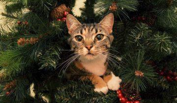 Кот отказывается слезать с елки