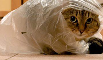 Кот не хочет отдавать пакет