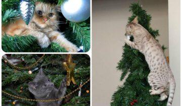 Кошки играют на Новогодней елке