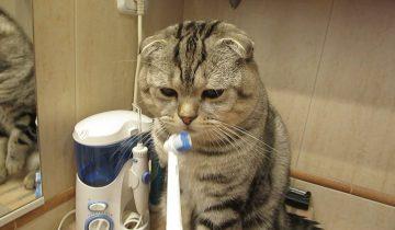 Кот Василий чистит зубы