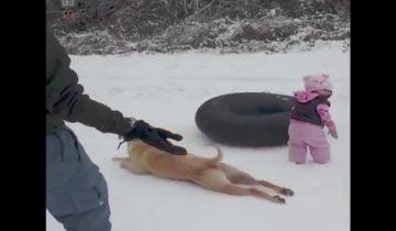 Пес скользит по снегу