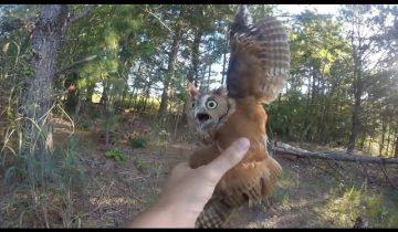 Спасение совы из рыболовной лески