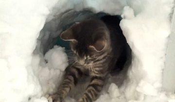Кот вырыл себе домик в сугробе