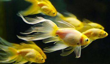 Прекрасное видео, которое показывает, что у рыб тоже есть чувства