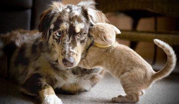 Как кошка с собакой играли