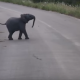 Слоненок разгоняет птиц