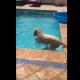 Пес достает мячик из бассейна