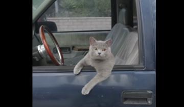 Кот и «каскадер»