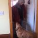 Собака пошутила над хозяйкой