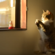 Кот копирует статуэтку