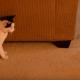 Кошка и луговая собачка