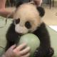 Бамбуковая малышка играет с мячиком