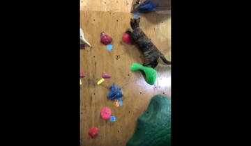 Этот кот – настоящий скалолаз