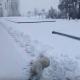 Лабрадор впервые видит снег