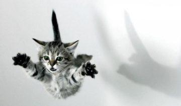 Вот к чему привели безобидные прыжки этого котенка!