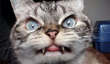 Эта кошка сошла с ума, она возомнила себя собакой!