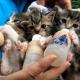 Котята пьют молочко из бутылочек