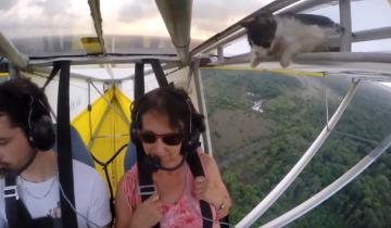 Бесстрашный кот летит на параплане!