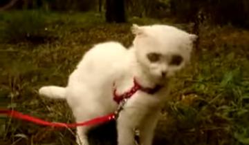Голодная кошка ест траву
