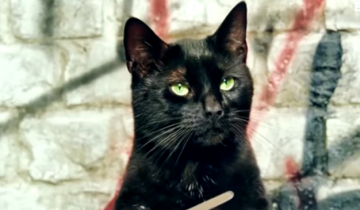 14 признаков того, что кошка вас любит