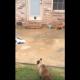 Кот и его новая дверца