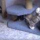 Вот, как проходит детство у кошек!