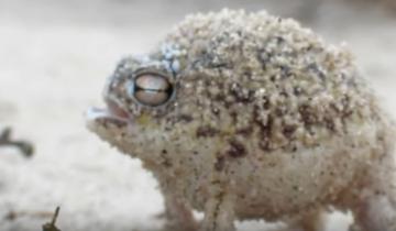 Милейшая лягушка в мире