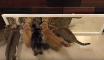 10 кошек и зеркало