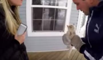 Спасение замерзающего котенка