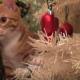 Наряжайте елку вместе с кошками!