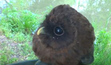 А вы знаете, что это за милая птица?