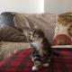 Когда вы увидите, как танцует этот котенок, вы будете поражены!