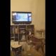 Пес увидел в телевизоре своего собрата, посмотрите на его рекацию!