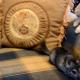 Кошка играет с шиншиллой