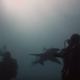 Трогательная дружба акулы и дайвера