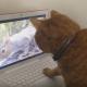 Кошка смотрит видео
