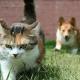 Дружелюбные собаки пытаются подружиться с кошками