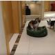 Щенок решил отнять лежак у кошки!